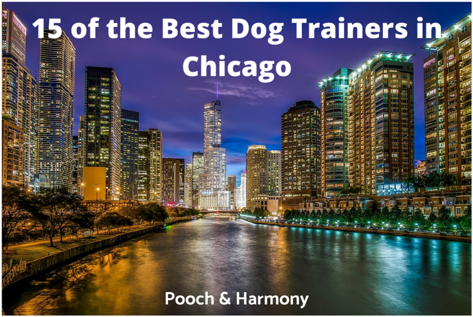 best dog trainers in chicago