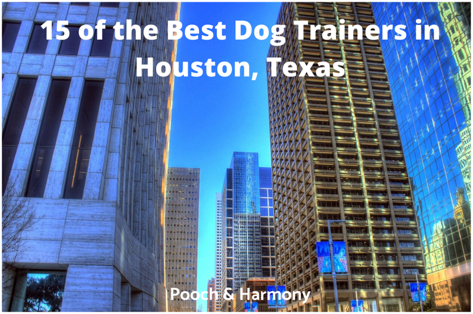 best dog trainers in houston, texas