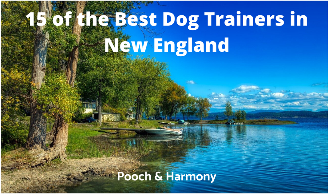 best dog trainers in new england