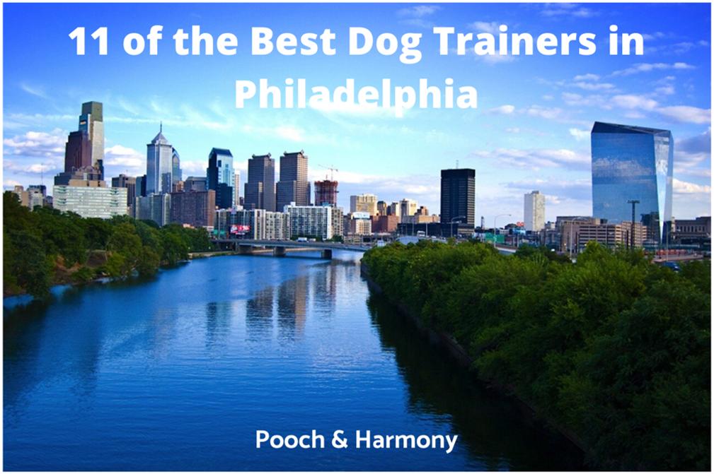 best dog trainers in philadelphia