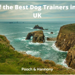 best dog trainers in the uk