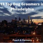 dog groomers in philadelphia
