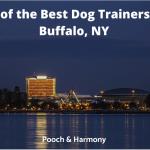 dog trainers in buffalo, ny