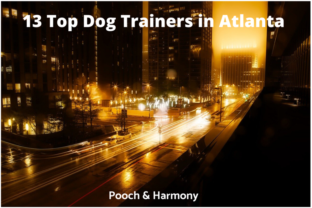 op dog trainers in atlanta