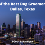 best dog groomers in Dallas, Texas