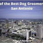 best dog groomers in San Antonio