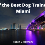 best dog trainers in miami