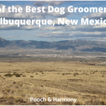 dog groomers in Albuquerque, New Mexico