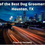 dog groomers in Houston, TX