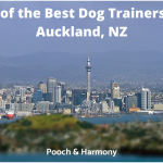 dog trainers in Auckland, NZ