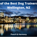 dog trainers in Wellington, NZ