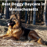 Best Doggy Daycare in Massachusetts