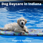Dog Daycare in Indiana