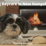 Dog Daycare in New Hampshire