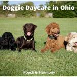Doggie Daycare in Ohio