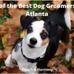 best dog groomers in Atlanta