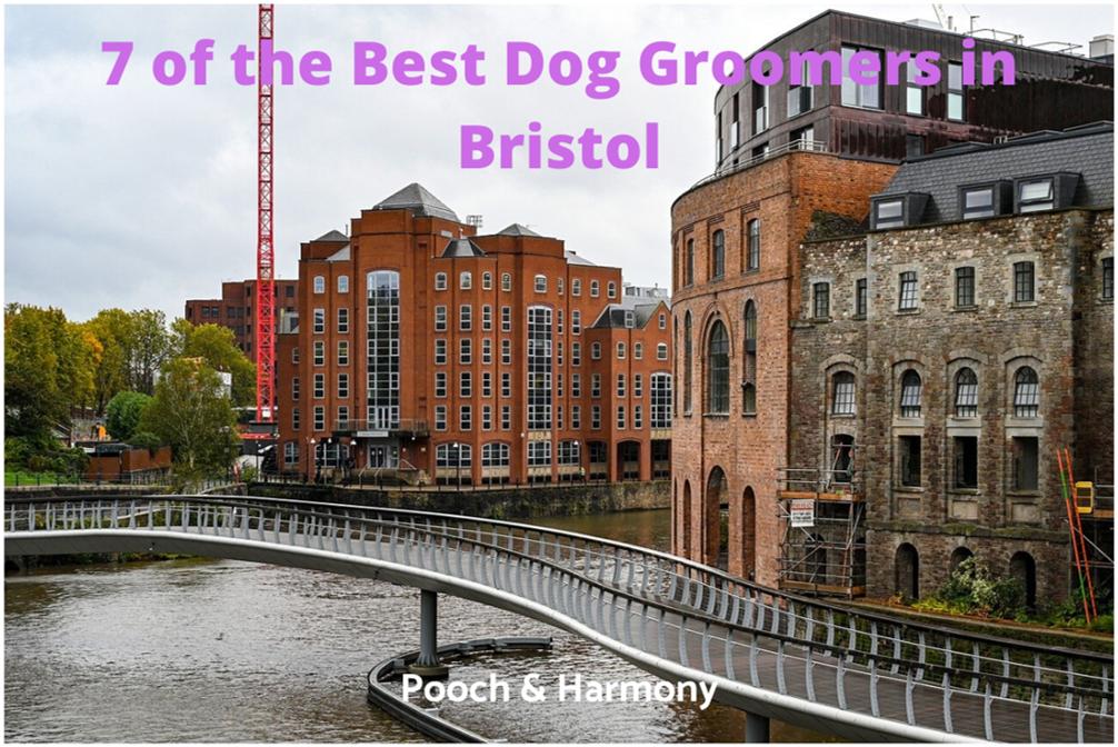 best dog groomers in Bristol