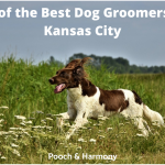best dog groomers in Kansas City
