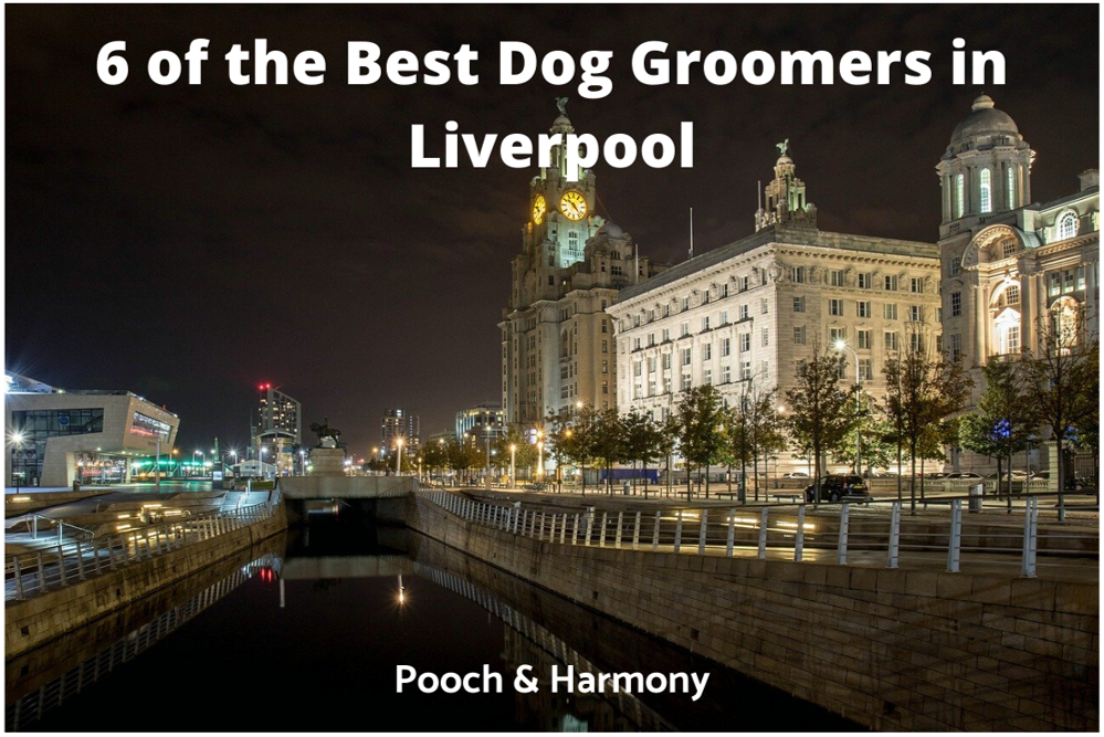 best dog groomers in Liverpool