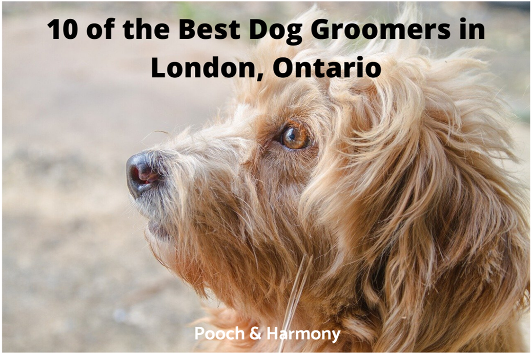 10 Of The Best Dog Groomers In London Ontario Pooch Harmony