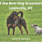 best dog groomers in Louisville, KY