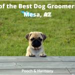 best dog groomers in Mesa, AZ