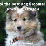 best dog groomers in Portand, Oregon