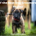 best dog groomers in Regina