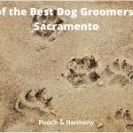 best dog groomers in Sacramento