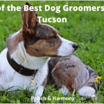 best dog groomers in Tucson