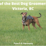 best dog groomers in Victoria, BC