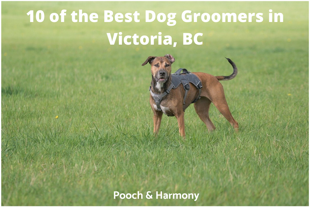 10 Of The Best Dog Groomers In Victoria Bc Pooch Harmony
