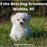 best dog groomers in Wichita, KS