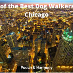 best dog walkers in Chicago