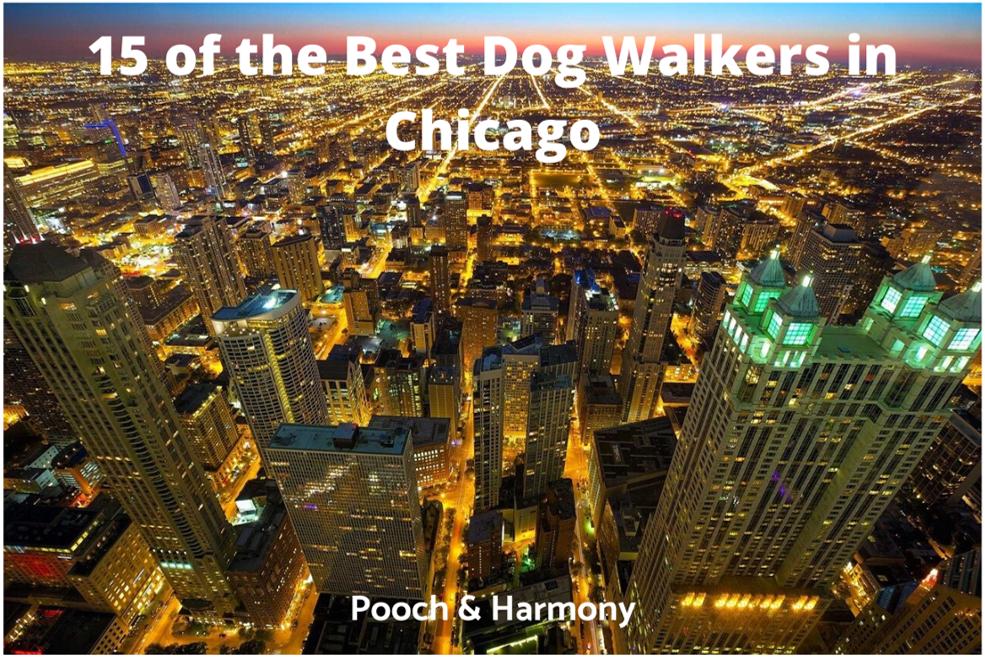 best dog walkers in Chicago