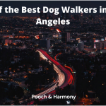 best dog walkers in Los Angeles