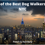 best dog walkers in NYC