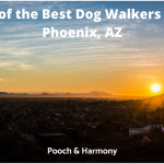 best dog walkers in Phoenix, AZ