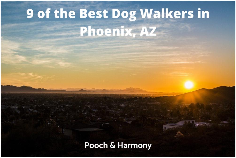 best dog walkers in Phoenix, AZ