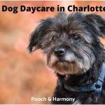 Best Dog Daycare in Charlotte, NC