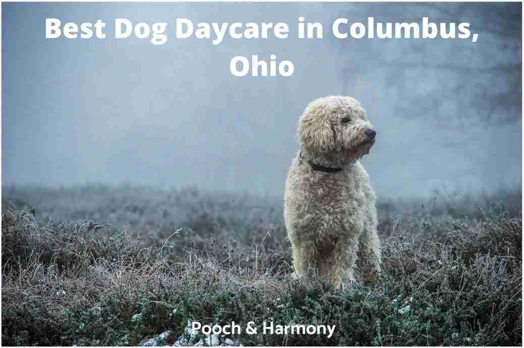 Best Dog Daycare in Columbus, Ohio