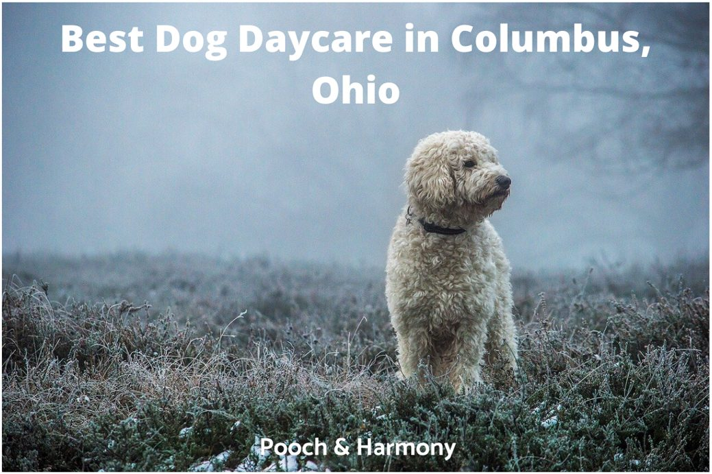 Best Dog Daycare In Columbus Ohio 10 Top Providers Pooch Harmony