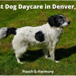 Best Dog Daycare in Denver, CO