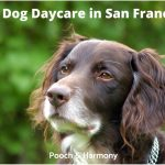 Best Dog Daycare in San Francisco