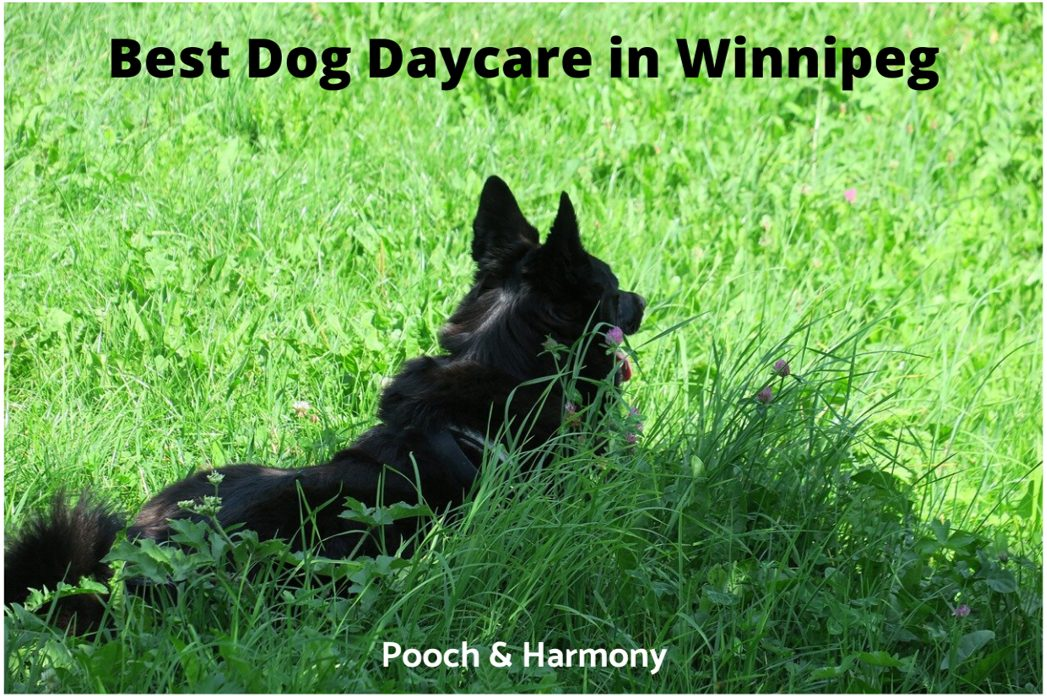 Best Dog Daycare in Winnipeg