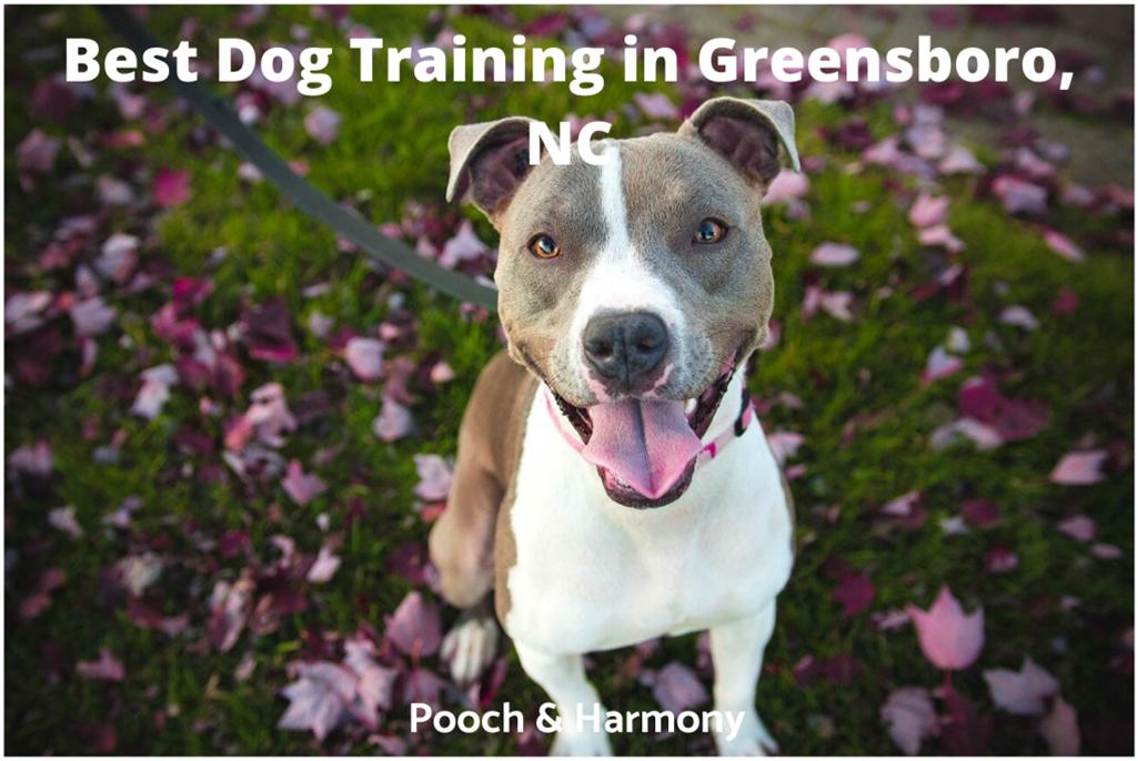 Best Dog Training in Greensboro, NC