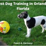 Best Dog Training in Orlando, Florida