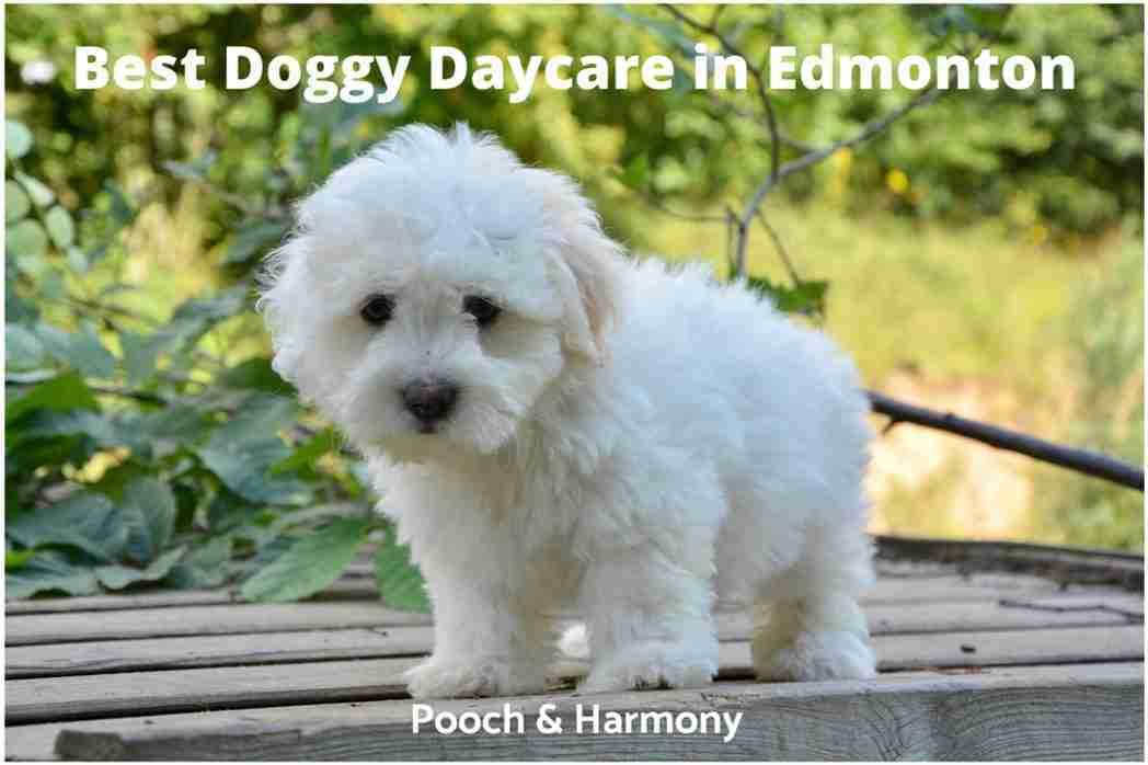 Best Doggy Daycare in Edmonton