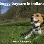 Best Doggy Daycare in Indianapolis
