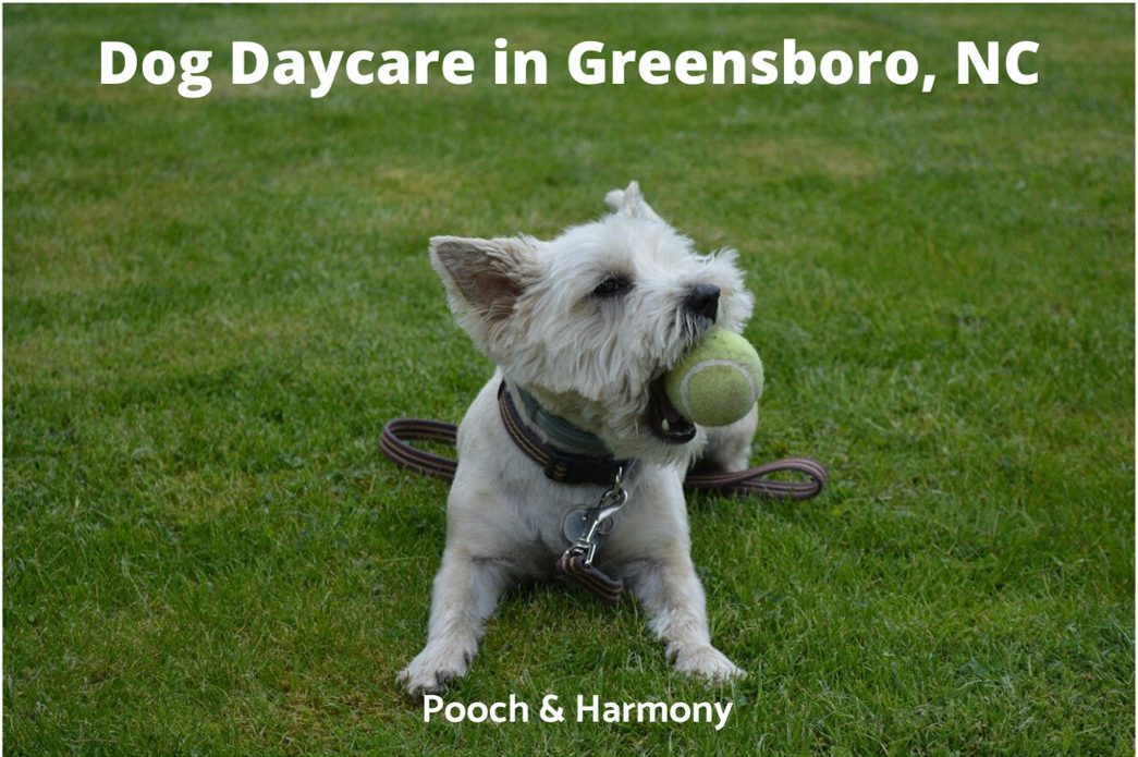 Dog Daycare in Greensboro, NC